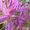 Волшебство цветения