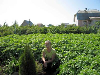 Великолепны посадки картофеля