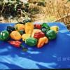 Перцы разноцветные