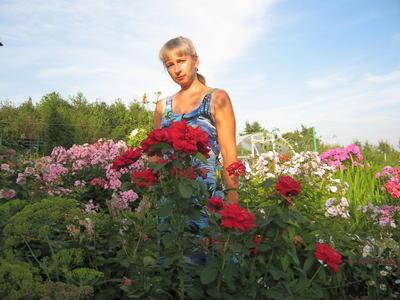 А так выглядит черенок корнесобственной чайно-гибридной розы, который я привезла из Крыма, на пятом году его жизни