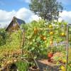 Огородный пейзаж