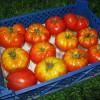 Так укладываются томаты для хранения