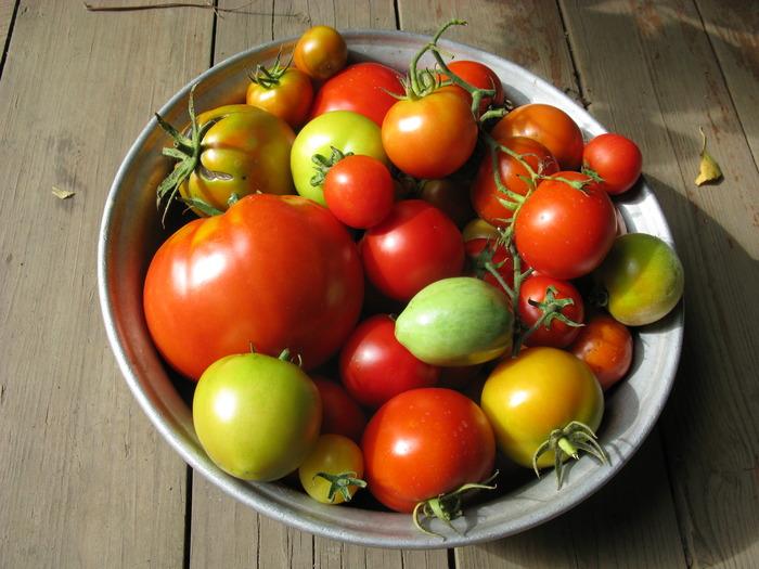 хранение урожая помидоров