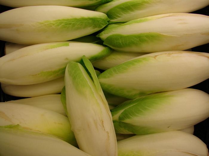 Цикорий для салата