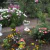 Цветы хороши