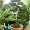 Мир декоративных растений