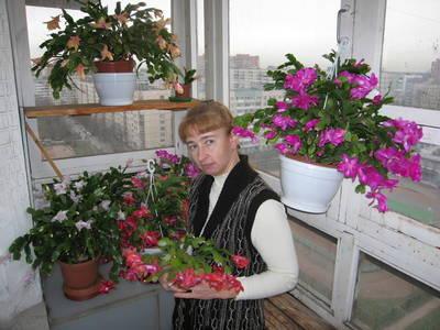 Кактусы цветут на балконе автора
