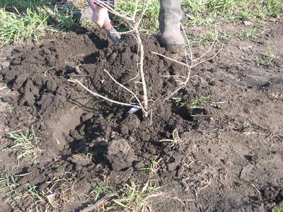 Подсыпаем питательную почву