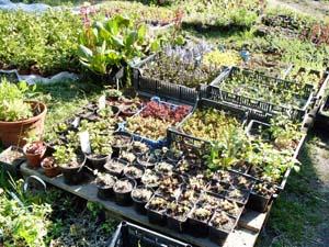 Вилла-планта питомник декоративных растений