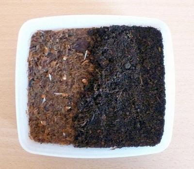 С появлением всходов семена на опилках присыпают почвой