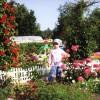 Цветущий уголок сада