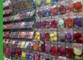 Садовый центр на Хасанском рынке