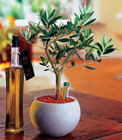 Продукты по уходу за комнатными растениями от компании  «Серамис» (Германия)
