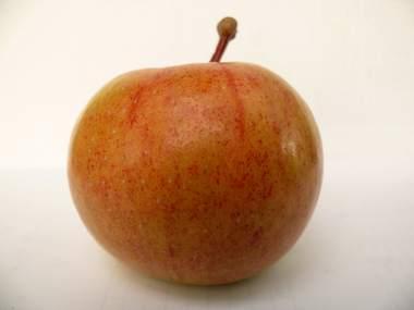 Яблоко сорт Болотовское