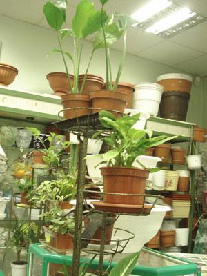 Магазин Семена