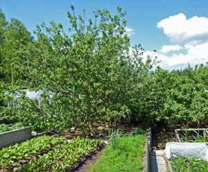 Терраса с овощными грядами