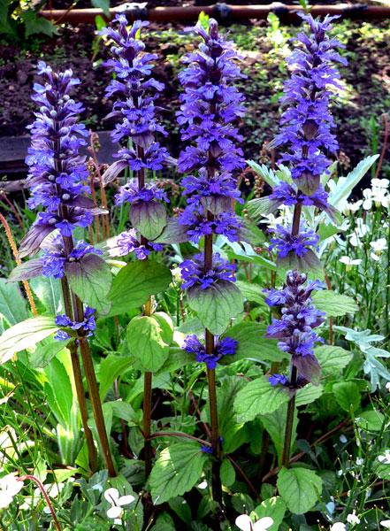 Цветы которые цветут в июне