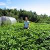 Картофельное поле картофель овощи огород